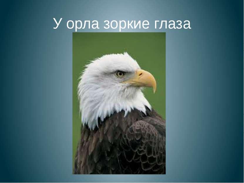 У орла зоркие глаза