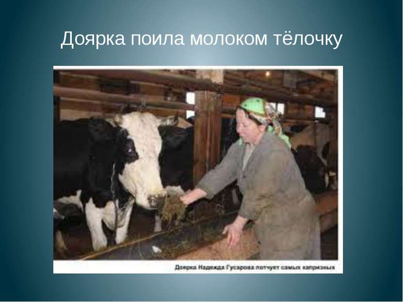 Доярка поила молоком тёлочку