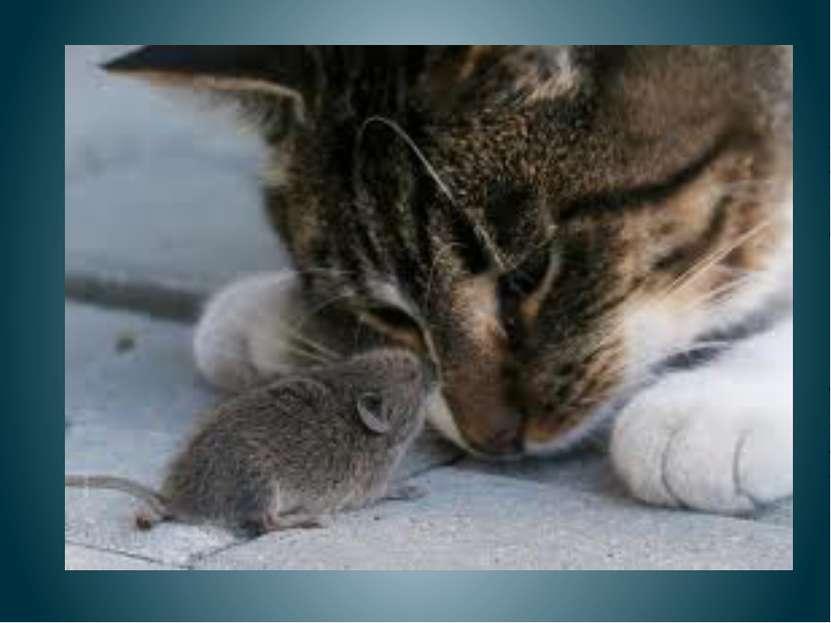 Кошка и мышка Мышка кошку угостила. Кошка мышь не проглотила. Почему не прогл...