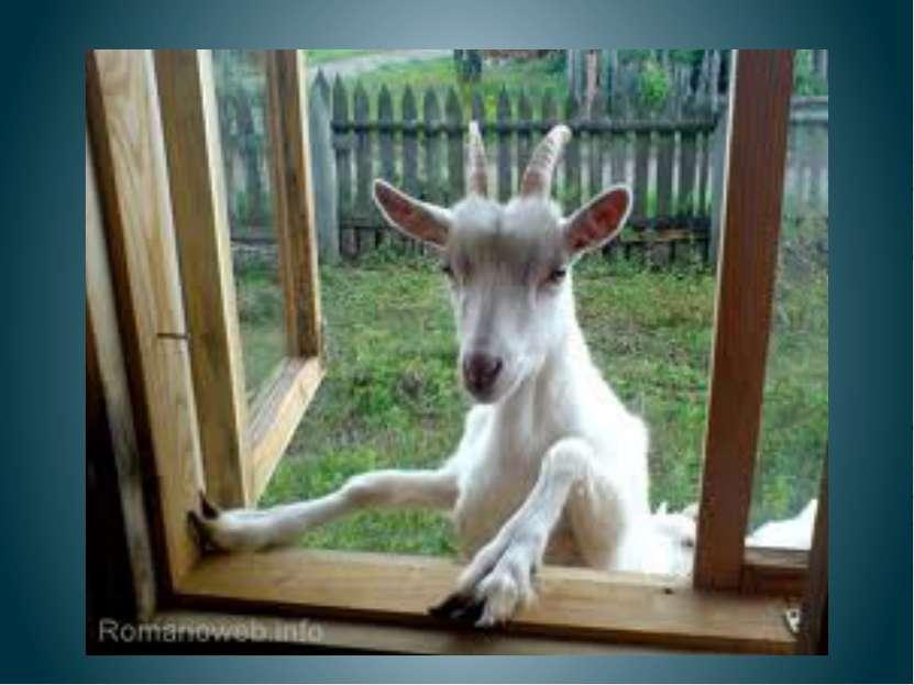Шла коза на базар, Несла новый самовар, Яблочек корзинку, Старую картинку. А....