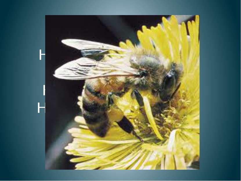 Пчела На цветке сидит пчела, До чего она мала. Набирает сладкий сок Наша пчёл...
