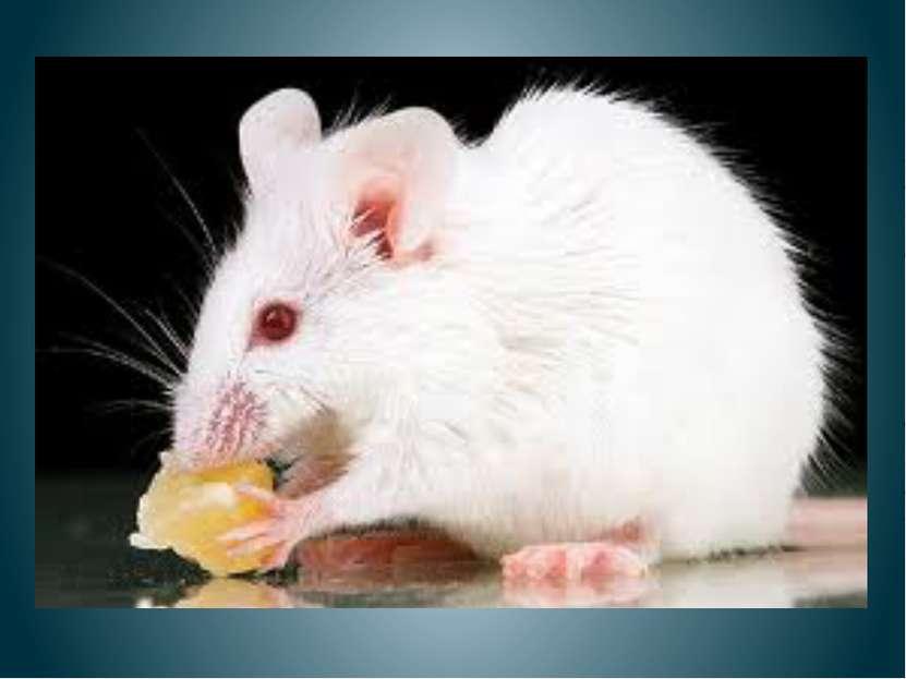 Нашла мышка колобок, Колобок - румяный бок, Очень вкусный и душистый, С корко...
