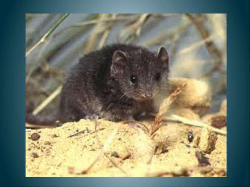Несла мышка колосок, Щекотал он мышке бок, Мышка так расхохоталась, Кошка даж...