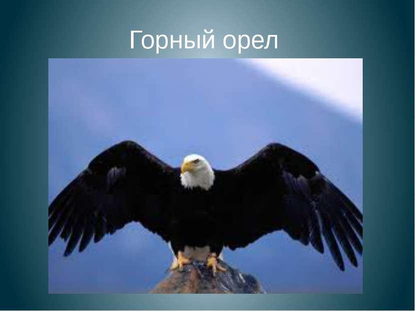 Горный орел