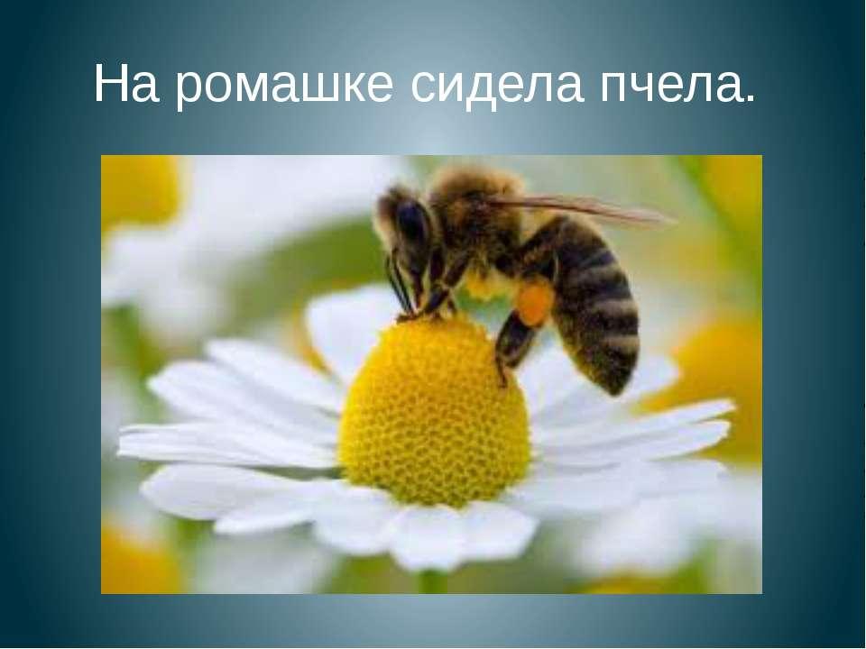 На ромашке сидела пчела.