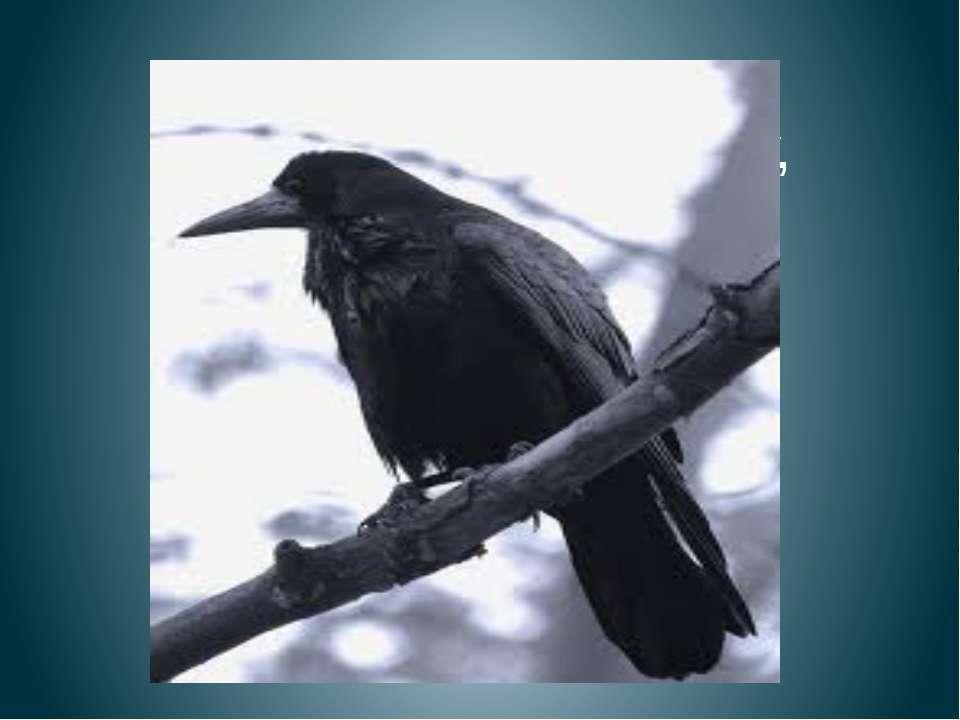 Чёрный ворон на дубу, Он играет во трубу. Труба точеная, Позолоченная, Труба ...