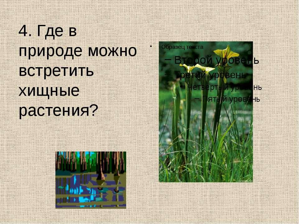 4. Где в природе можно встретить хищные растения?