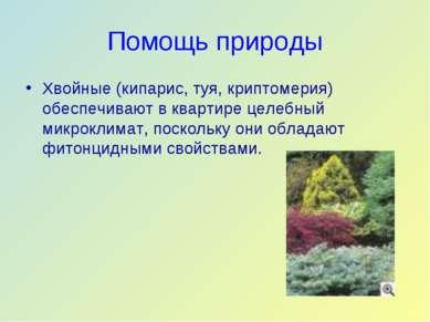 Помощь природы Хвойные (кипарис, туя, криптомерия) обеспечивают в квартире це...