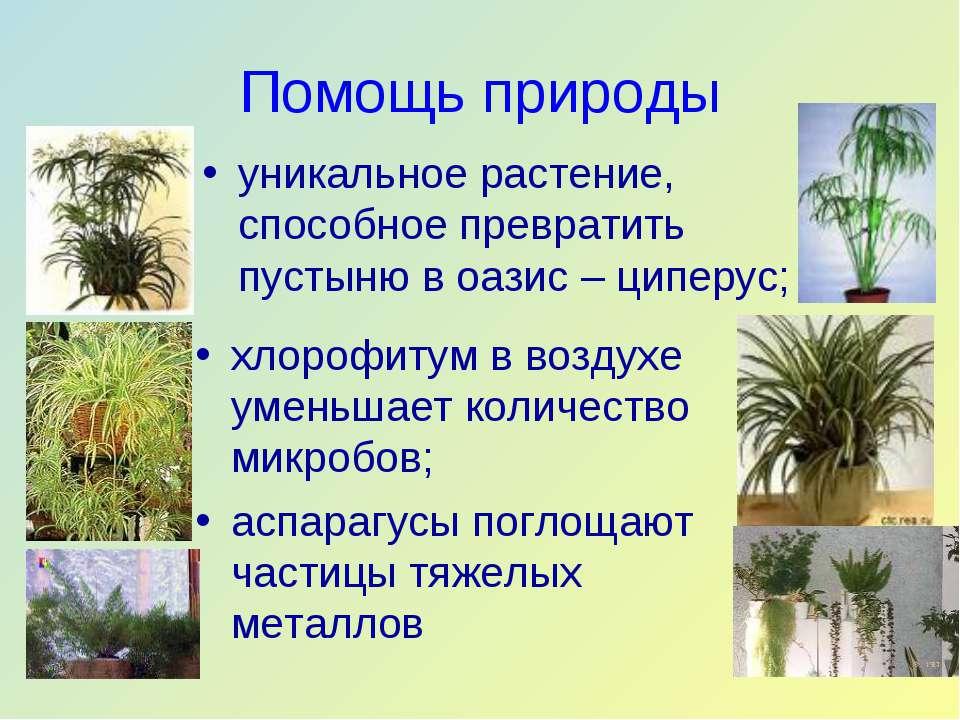 Помощь природы уникальное растение, способное превратить пустыню в оазис – ци...