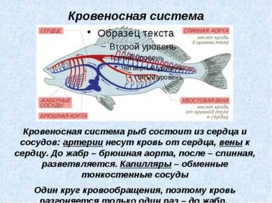 Кровеносная система рыб состоит из сердца и сосудов: артерии несут кровь от с...
