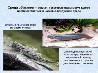 Среда обитания – водная, некоторые виды могут долгое время оставаться в назем...