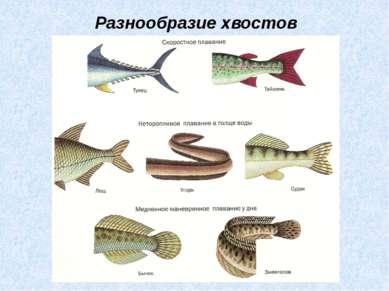 Разнообразие хвостов