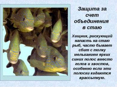 Хищник, рискующий напасть на стаю рыб, часто бывает сбит с толку мельканием я...