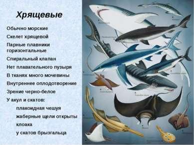 Хрящевые Обычно морские Скелет хрящевой Парные плавники горизонтальные Спирал...