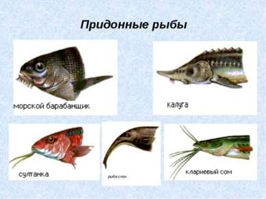 Придонные рыбы