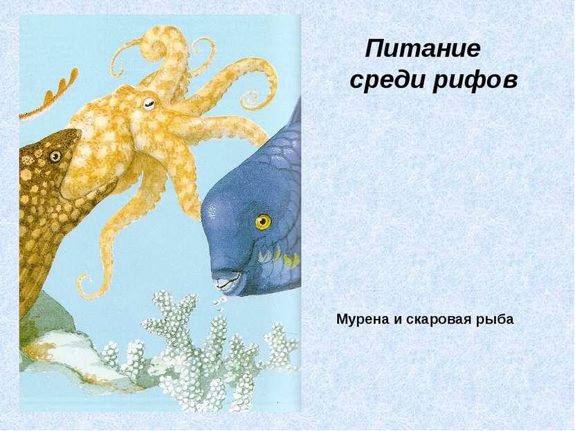 Мурена и скаровая рыба Питание среди рифов