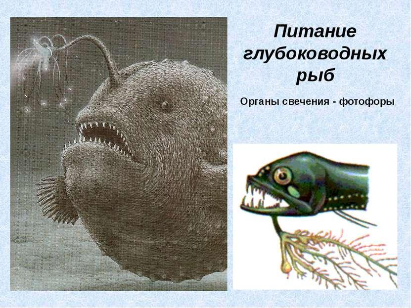 Питание глубоководных рыб Органы свечения - фотофоры