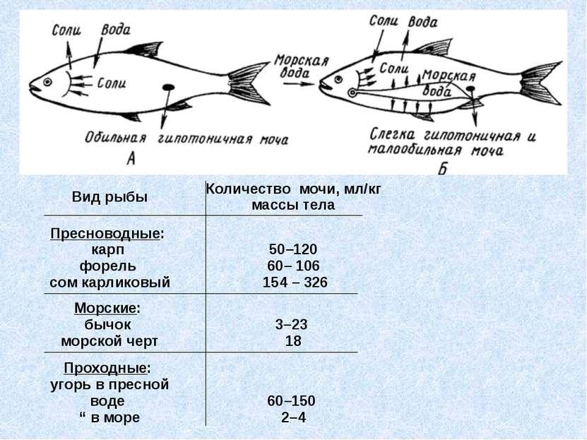 Вид рыбы Количество мочи, мл/кг массы тела Пресноводные: карп форель сом к...