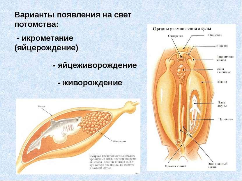 Варианты появления на свет потомства: - икрометание (яйцерождение) - яйцеживо...