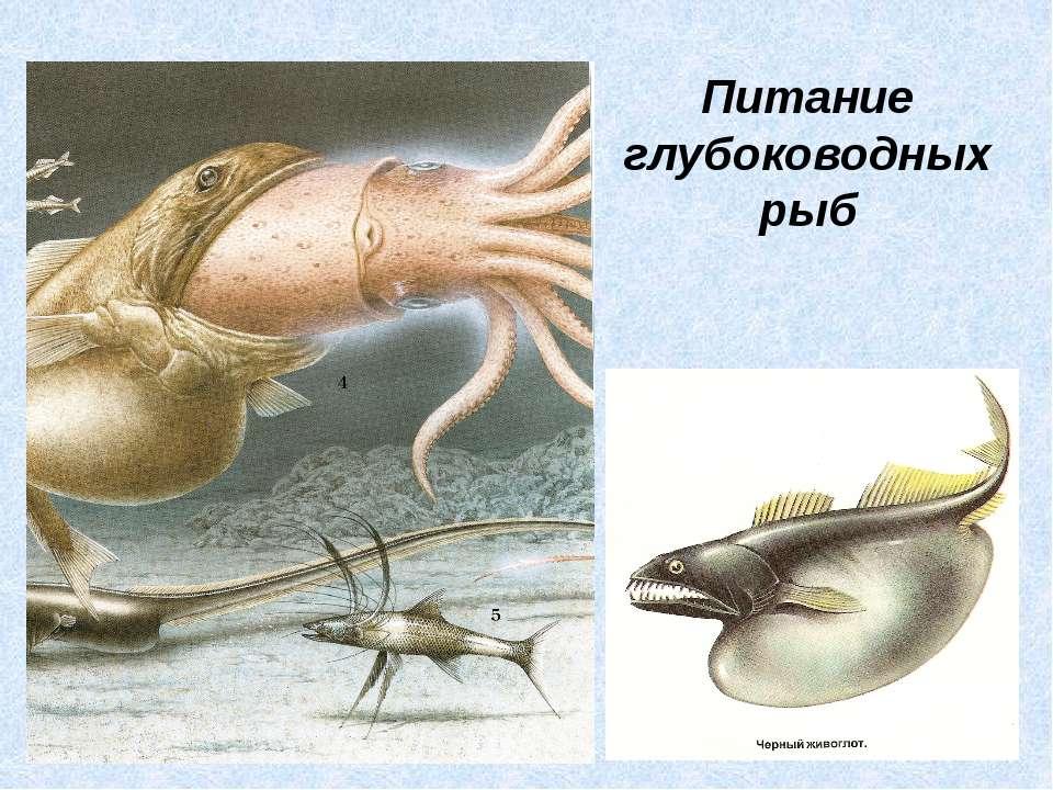 Питание глубоководных рыб