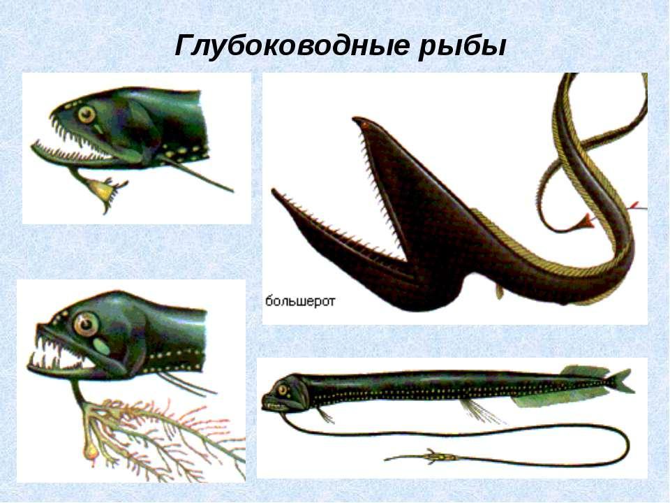 Глубоководные рыбы