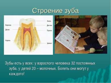 Строение зуба Зубы есть у всех: у взрослого человека 32 постоянных зуба, у де...