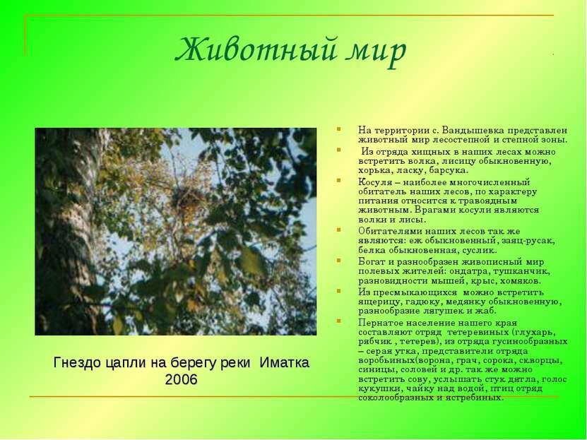 Животный мир На территории с. Вандышевка представлен животный мир лесостепной...