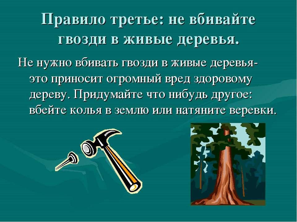 Правило третье: не вбивайте гвозди в живые деревья. Не нужно вбивать гвозди в...