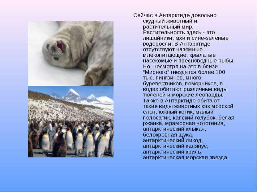 Сейчас в Антарктиде довольно скудный животный и растительный мир. Растительно...