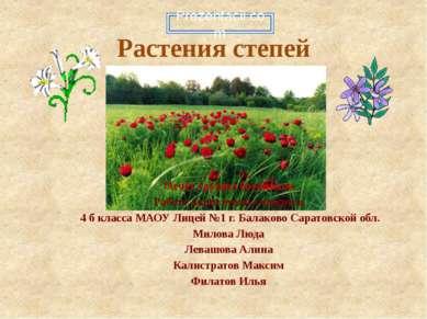 Растения степей Отчёт группы ботаников Работу выполнили учащиеся 4 б класса М...