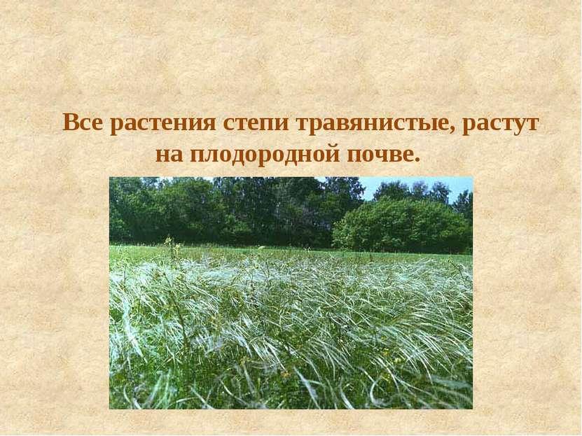 Все растения степи травянистые, растут на плодородной почве.