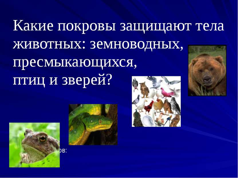 Какие покровы защищают тела животных: земноводных, пресмыкающихся, птиц и зве...