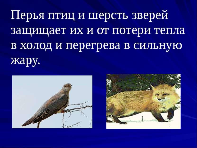 Перья птиц и шерсть зверей защищает их и от потери тепла в холод и перегрева ...