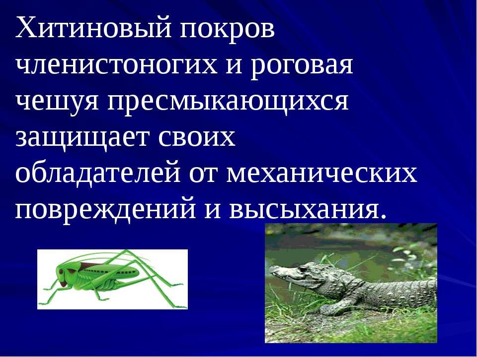 Хитиновый покров членистоногих и роговая чешуя пресмыкающихся защищает своих ...