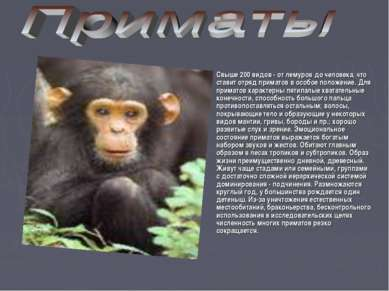 Свыше 200 видов - от лемуров до человека, что ставит отряд приматов в особое ...