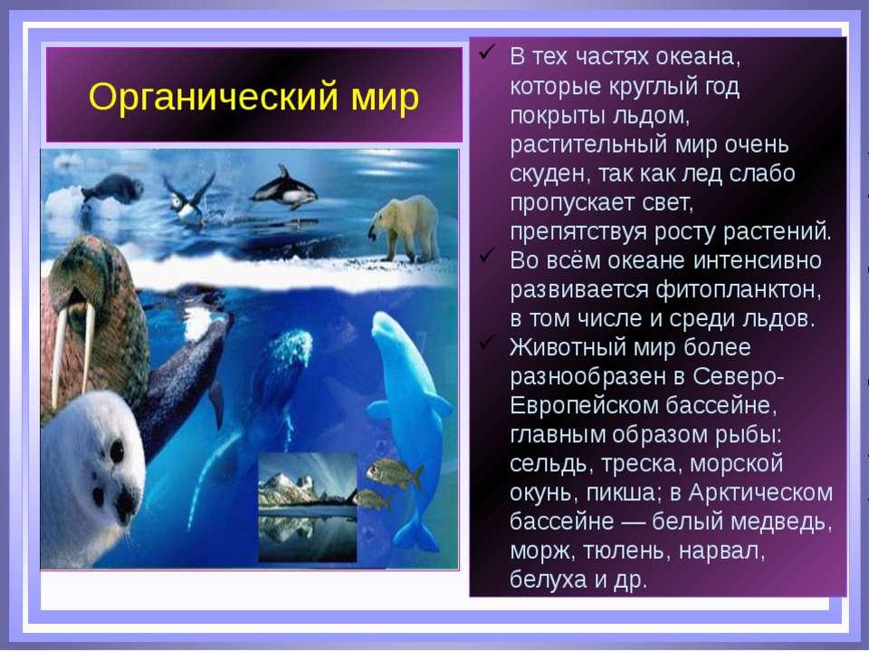 Органический мир В тех частях океана, которые круглый год покрыты льдом, раст...