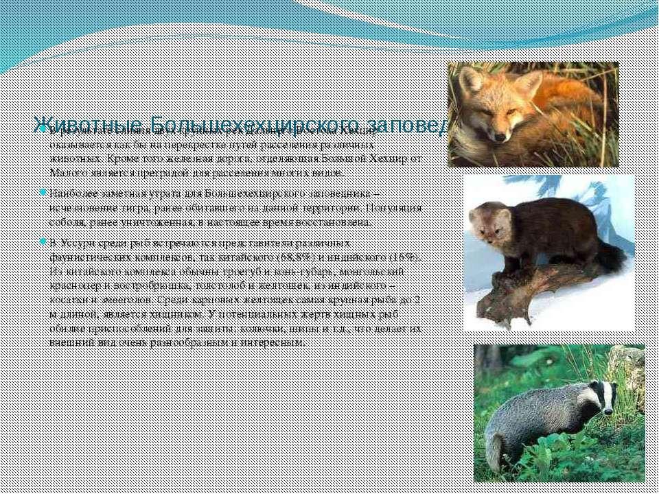 Животные Большехехцирского заповедника В результате слияия двух крупных рек Д...