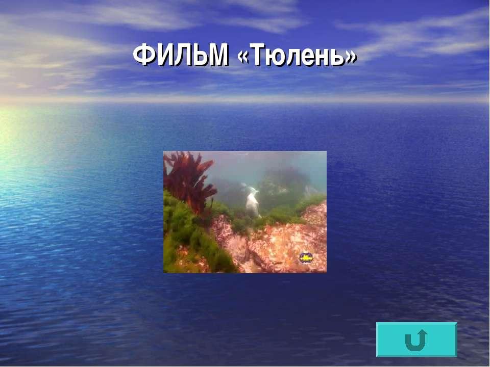 ФИЛЬМ «Тюлень»