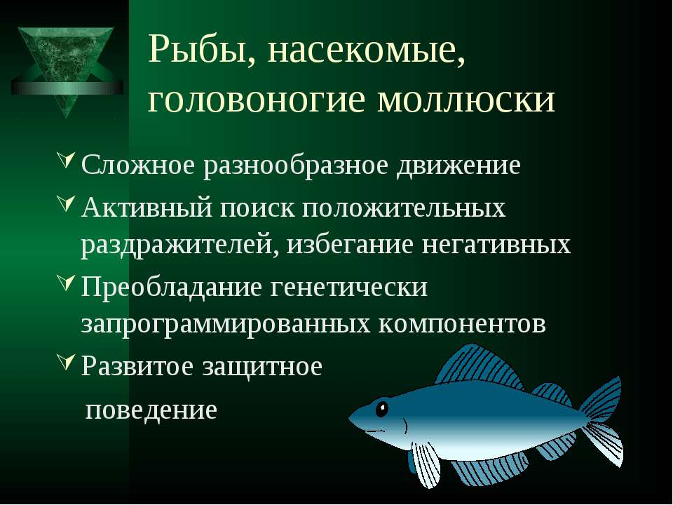 Рыбы, насекомые, головоногие моллюски Сложное разнообразное движение Активный...