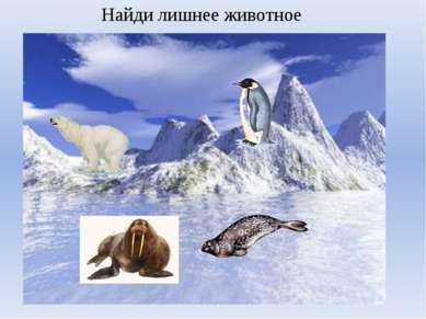 Найди лишнее животное