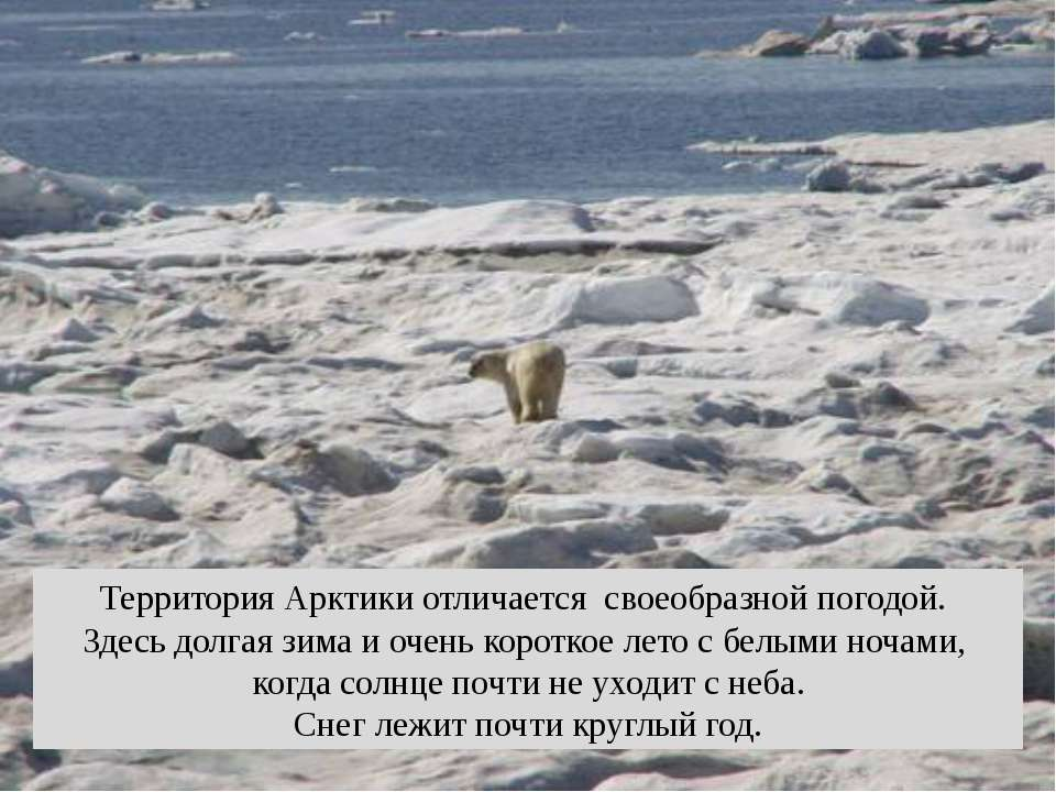 Территория Арктики отличается своеобразной погодой. Здесь долгая зима и очень...