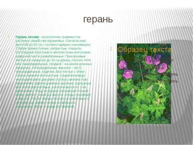 герань Герань лесная - многолетнее травянистое растение семейства гераниевых ...
