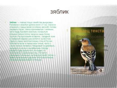 зяблик Зяблик — певчая птица семейства вьюрковых. Размером с воробья (длина ...