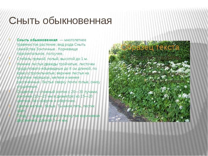 Сныть обыкновенная Сныть обыкновенная — многолетнее травянистое растение; ви...