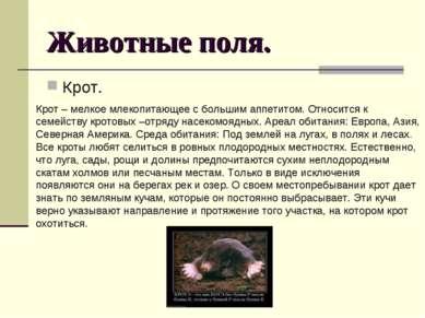 Животные поля. Крот. Крот – мелкое млекопитающее с большим аппетитом. Относит...