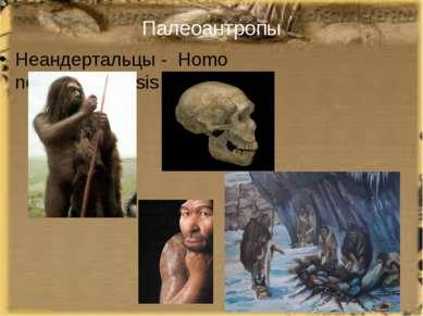 Палеоантропы Неандертальцы - Homo neanderthalensis