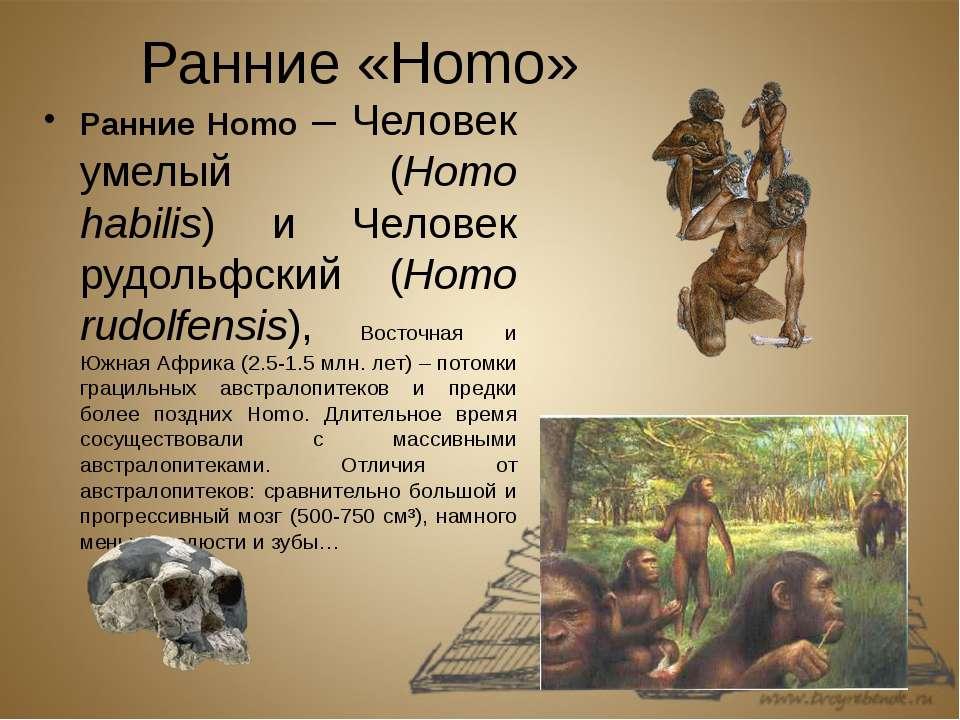 Ранние «Homo» Ранние Homo – Человек умелый (Homo habilis) и Человек рудольфск...