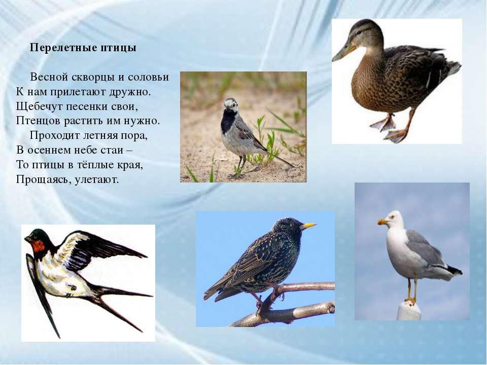 Перелетные птицы Весной скворцы и соловьи К нам прилетают дружно. Щебечут пес...
