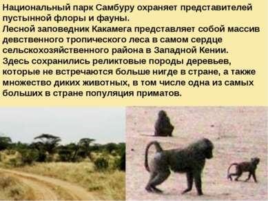 Национальный парк Самбуру охраняет представителей пустынной флоры и фауны. Ле...