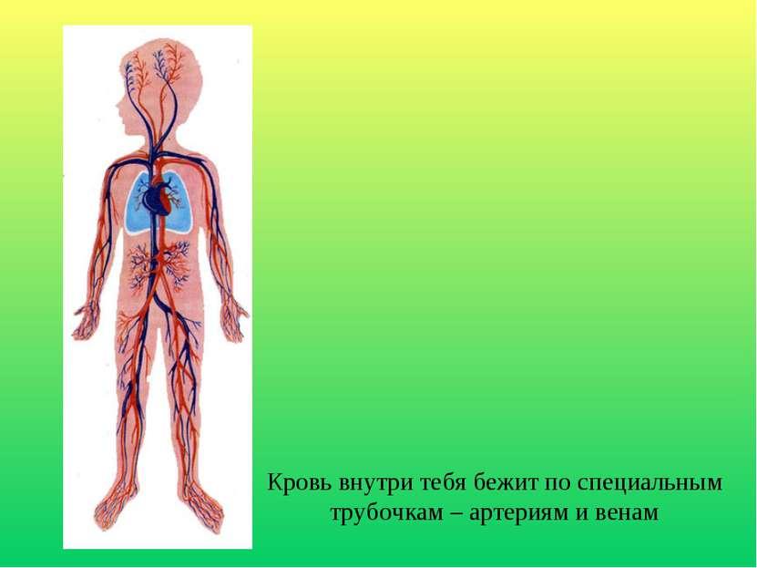 Кровь внутри тебя бежит по специальным трубочкам – артериям и венам